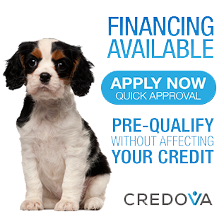 financing for puppies available